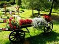 Okrasné kvety v záhrade